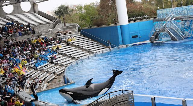 %22Believe%2C+The+Spectacular+Shamu+Show%2C%22+resumes+February+27%2C+2010%2C+at+SeaWorld%27s+Shamu+Stadium%2C+three+days+after+a+killer+whale+pulled+veteran+trainer+Dawn+Brancheau+to+her+death.+Trainers+work+with+the+animals+from+shallow+ledges+built+into+the+sides+of+its+tanks.+%28Ricardo+Ramirez+Buxeda%2FOrlando+Sentinel%2FMCT%29